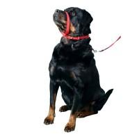 K-9 Collar K9 Spirit Para Cães